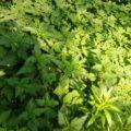 ziele rosnące na brzegu stawu
