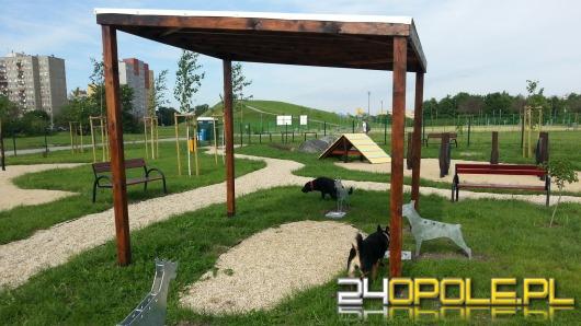 psi park z widokiem na górkę śmierci