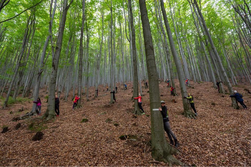 kobiety przytulają drzewa